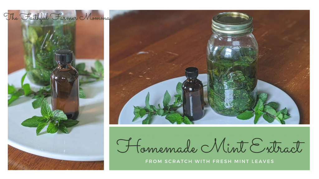 homemade mint extract fresh mint leaves