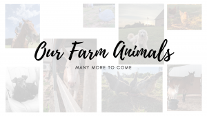 farm animals homestead